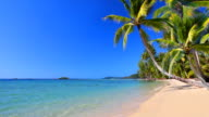 Tropical beach with palm trees. video