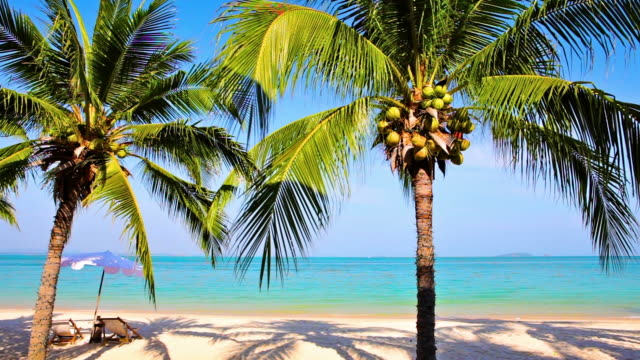Tropical beach with palm trees video