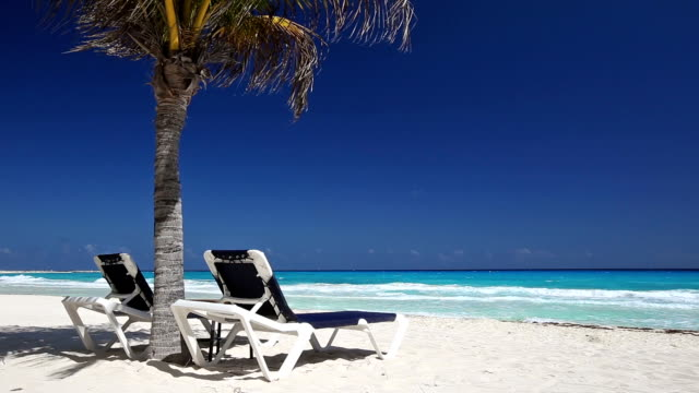 Tropical beach with sun umbrellas and beds video