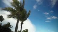 Tropical Breeze video