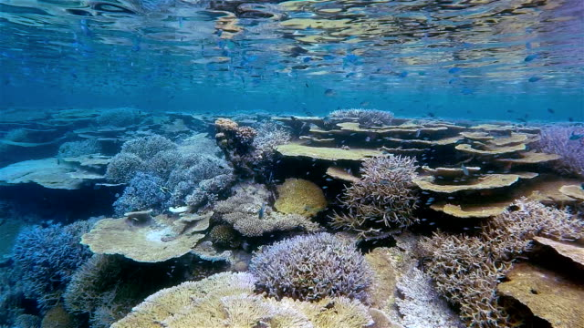 Tropical coral reef on Maldives in Slow Motion video