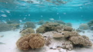 Tropical coral reef on Maldives video