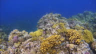 Tropical Fish an beautiful coral reef on Red Sea / Egypt video