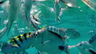 Tropical Fish in Mauritius video