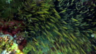 Tropical Fish on Vibrant Coral Reef video