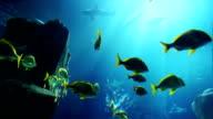 Tropical Fish video