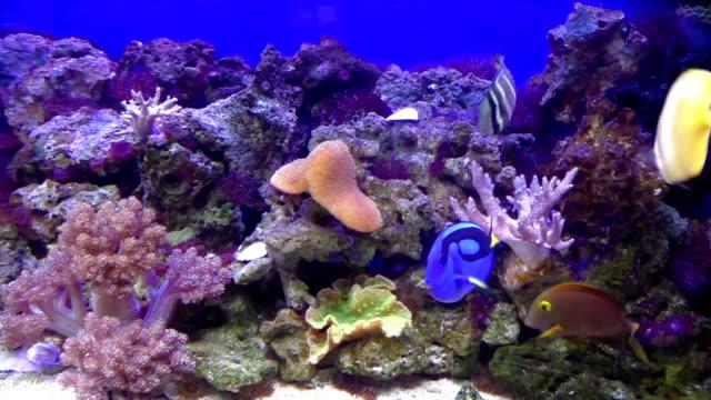 Tropical fishes at  aquarium, Czech Republic video
