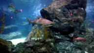 tropical fishes at stones and corals video
