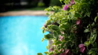 Tropical flowers in front of swimming pool video