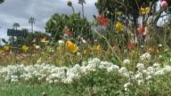 (HD1080i) Tropical Flowers Roadside video