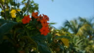 Tropical Flowers video