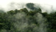 Tropical Forest with Clouds Pan video