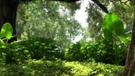 Tropical Garden video