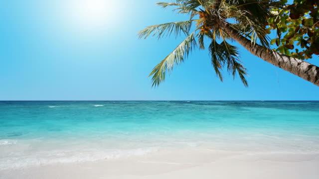 Tropical Heaven video