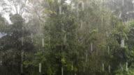 tropical heavy falling rain video