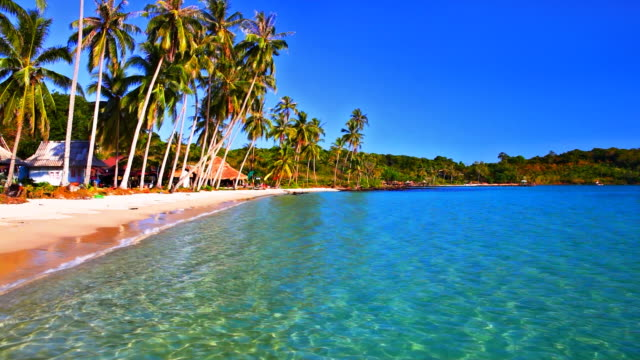 Tropical hotel beach, palm tree, blue sky and sea water video
