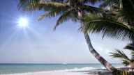 Tropical island vacation idyllic background. Exotic sandy beach and palm tree on sea coast at sunny day with blue sky. Tranquil summer scene video