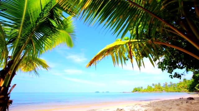 Tropical island. video