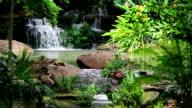 Tropical Jungle video