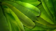 Tropical Leaves Transition with Alpha Matte video