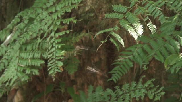 Tropical mosquitos swam video