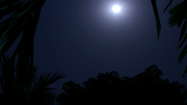 Tropical night time lapse shot. video