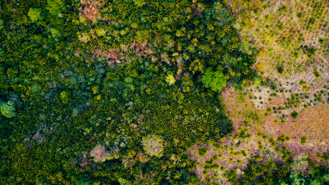Tropical Palm Trees from above video