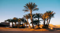 Tropical Palm Trees on Sky Background in Desert video