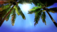 Tropical palms video
