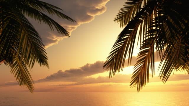 Tropical paradise. HD720p video
