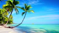 Tropical Paradise. video