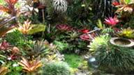 Tropical Pond & Garden - Keaau, Hawaii video