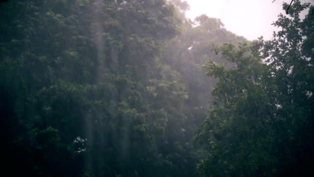 tropical pouring rain video