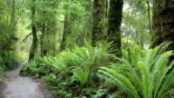 Tropical Rain Forest, Te Anau, New Zealand video