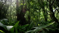 Tropical rain forest trees and shrubs video