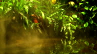 Tropical rain forest video