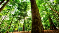Tropical Rain Forest video