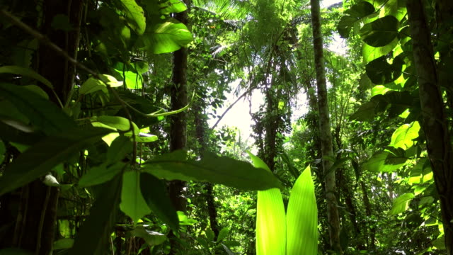 Tropical Rainforest video