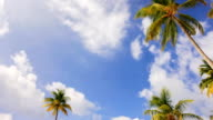 Tropical resort with  white sandy beach. video