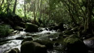 Tropical river water over rocks video