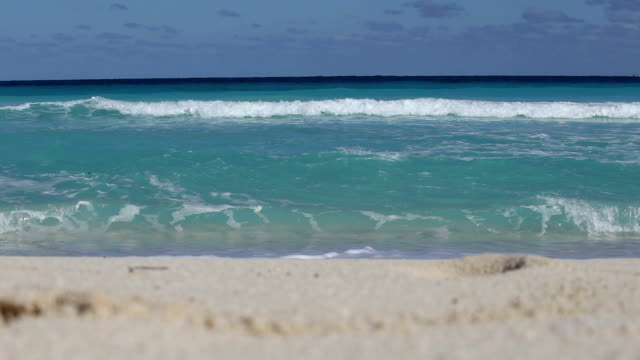 Tropical sandy shore video