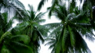 Tropical scene with palm trees video