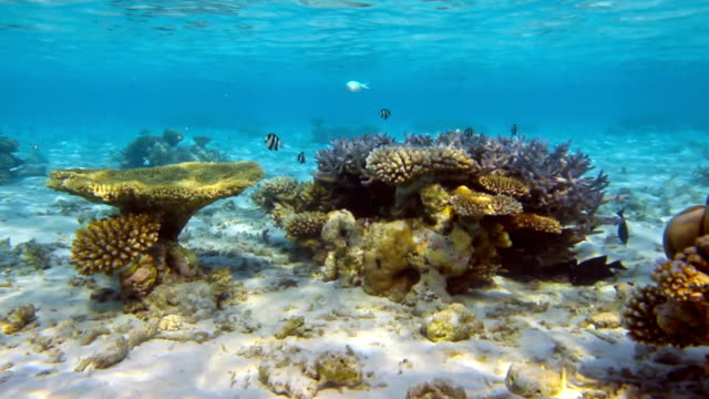 Tropical Sea Life video