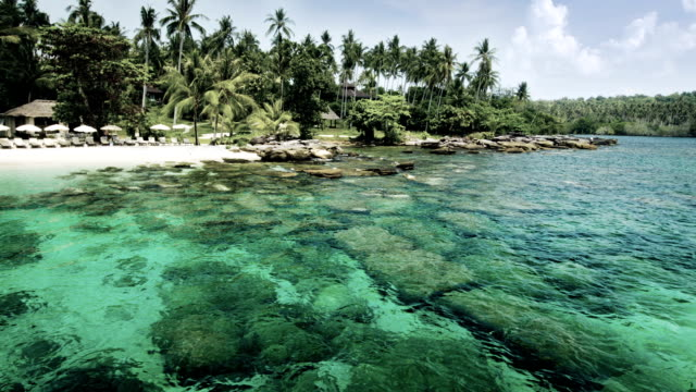 Tropical sea video