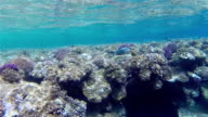Tropical shallow coral reef on Red Sea - Egypt video