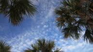 Tropical Skies video