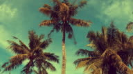 Tropical sky and palm tree, memory of vintage color video