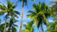 Tropical sky where palm trees sway in the wind video