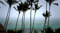 Tropical Storm Palm Trees video