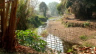 Tropical Stream video